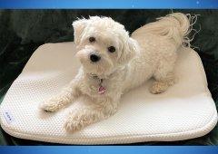 BAGPAD® - Antibakterielle Auflage für Hunde